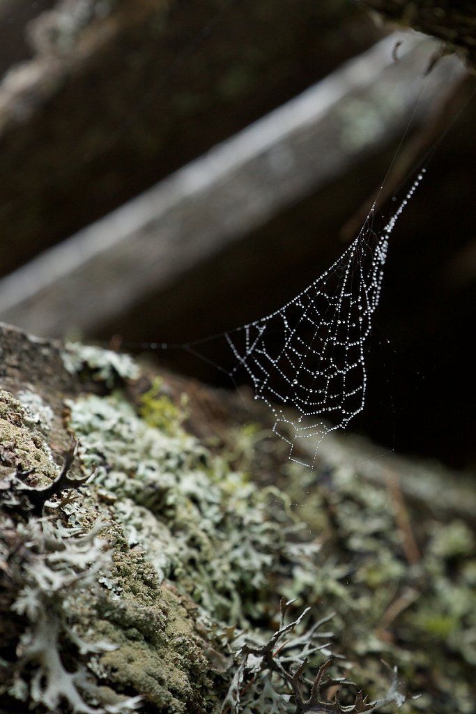 Spinnennetz an einem Schuppen